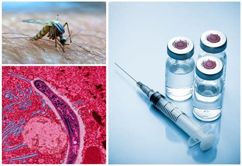 Combating malaria: mechanisms of immunity and vaccination